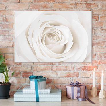 Quadro in vetro - Pretty White Rose - Orizzontale 3:2
