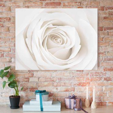 Quadro in vetro - Pretty White Rose - Orizzontale 4:3