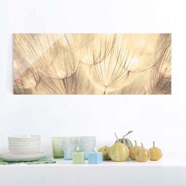 Quadro in vetro - Dandelions close-up in sepia tones homely - Panoramico