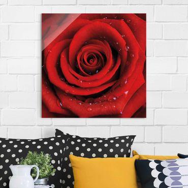 Quadro in vetro - Red rose with water drops - Quadrato 1:1
