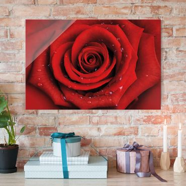 Quadro in vetro - Red rose with water drops - Orizzontale 3:2