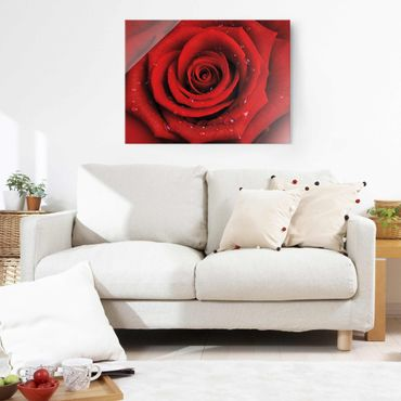 Quadro in vetro - Rosa rossa con gocce di rugiada - Orizzontale 4:3