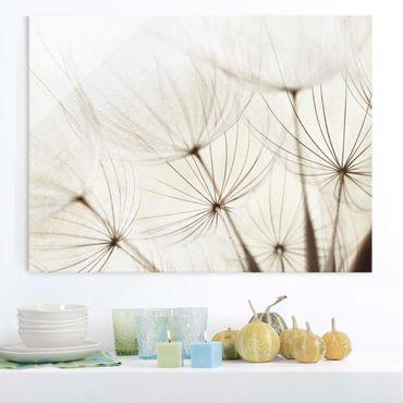 Quadro in vetro - Gentle Grasses - Orizzontale 4:3