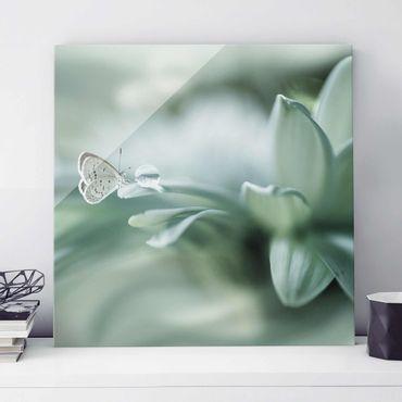 Quadro in vetro - Farfalla E Gocce di rugiada In Pastel Verde - Quadrato 1:1