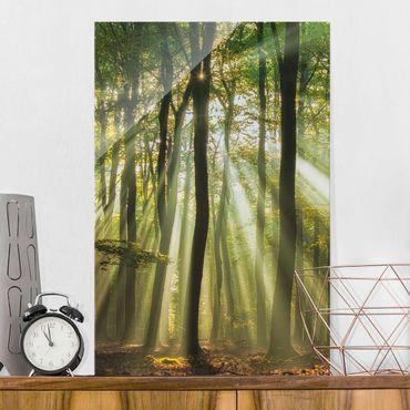 Quadro in vetro - Giornata di Sole nella Foresta - Verticale 2:3