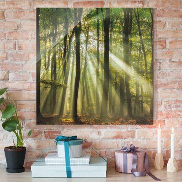 Quadro in vetro - Giornata di Sole nella Foresta - Quadrato 1:1