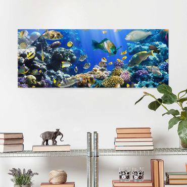 Quadro in vetro - Underwater Reef - Panoramico
