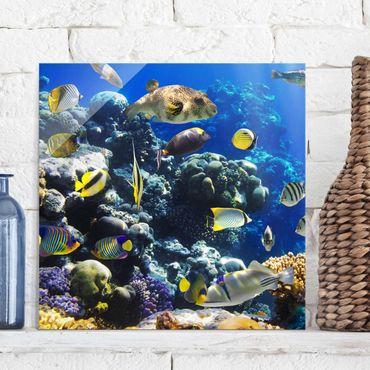 Quadro in vetro - Underwater Reef - Quadrato 1:1