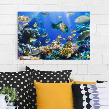 Quadro in vetro - Underwater Reef - Orizzontale 3:2