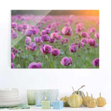 Quadro in vetro - Violet poppy flowers meadow in spring - Orizzontale 3:2
