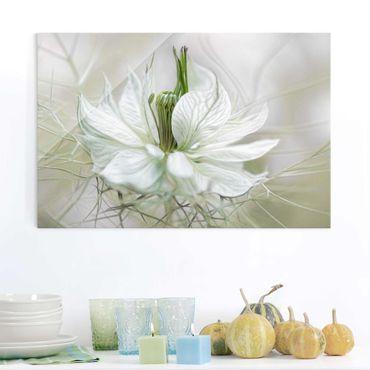 Quadro in vetro - Bianco Nigella - Orizzontale 3:2