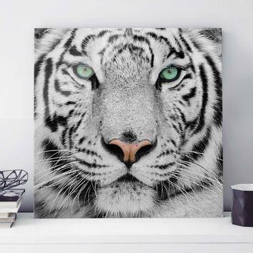Quadro in vetro - White Tiger - Quadrato 1:1