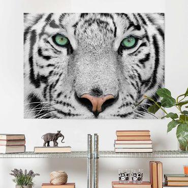 Quadro in vetro - White Tiger - Orizzontale 4:3