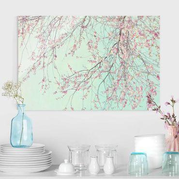 Quadro in vetro - Nostalgia di fiori di ciliegio