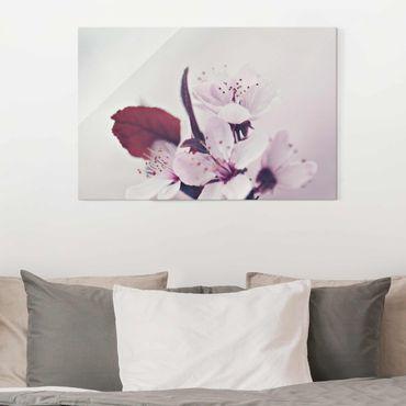 Quadro in vetro - Ramo di fiori di ciliegio in rosa antico