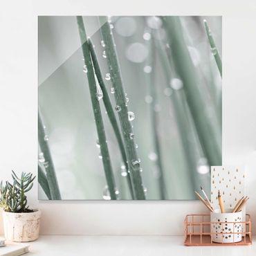 Quadro in vetro - Macro inquadratura di perle d'acqua nell'erba
