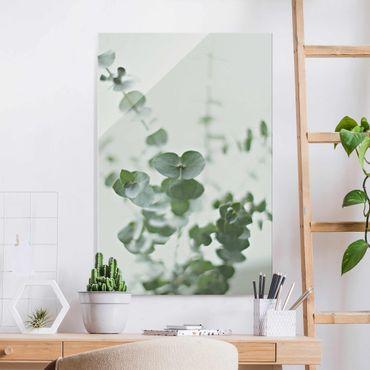 Quadro in vetro - Crescita di ramo di eucalipto