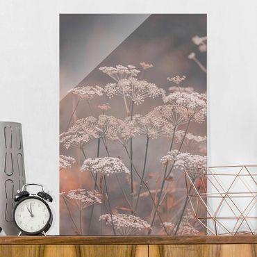 Quadro in vetro - Ombrellifere selvatiche