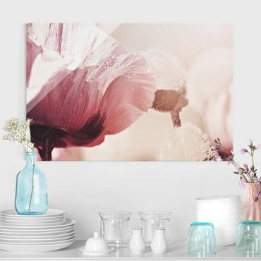 Quadro in vetro - Papaveri delicati rosati con gocce d'acqua