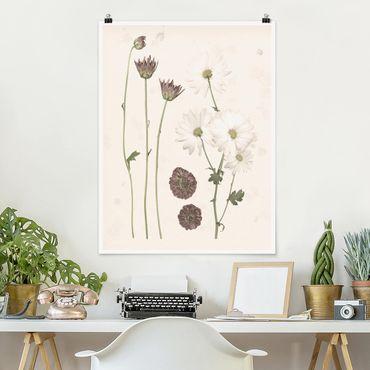 Poster - Herbarium In Pink IV - Verticale 4:3