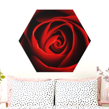Esagono in forex - lovely Rose