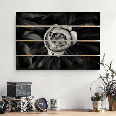 Stampa su legno - Peony fiore bianco frontale nero Foglie - Orizzontale 2:3