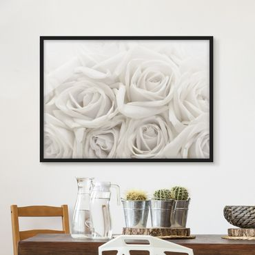 Poster con cornice - White Roses - Orizzontale 3:4