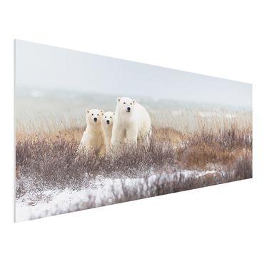 Quadro in forex - Orso polare e suoi cuccioli - Panoramico