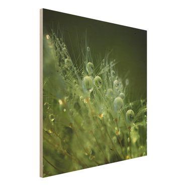 Quadro in legno - Semi verdi Sotto La Pioggia - Quadrato 1:1