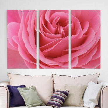 Stampa su tela 3 parti - Lustful Pink Rose - Verticale 2:1