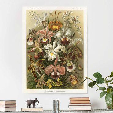 Quadro in vetro - Consiglio Orchid Vintage - Verticale 4:3