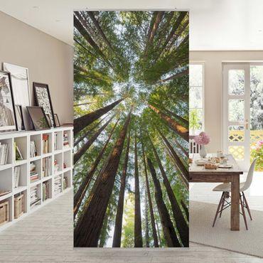 Tenda a pannello - Sequoia treetops 250x120cm
