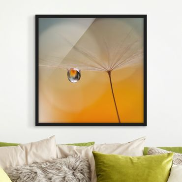 Poster con cornice - Dandelion In Orange - Quadrato 1:1