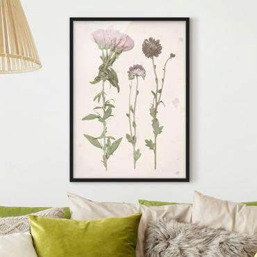 Poster con cornice - Herbarium In Rosa III - Verticale 4:3