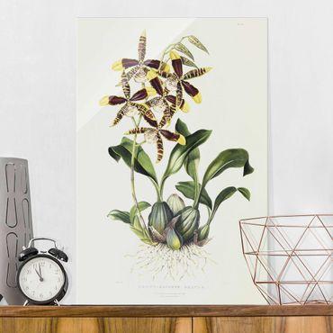 Quadro in vetro - Maxim Gauci - orchidea II - Verticale 3:2