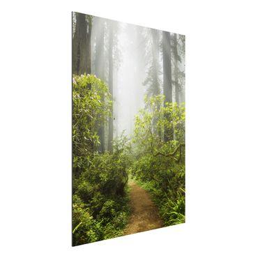 Quadro in alluminio - Misty forest path