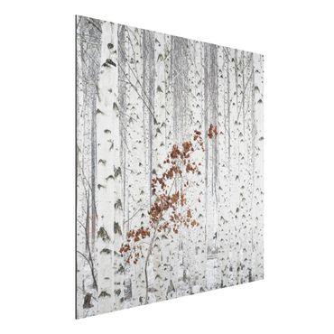 Quadro in alluminio - betulle in autunno
