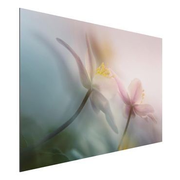 Quadro in alluminio - Windflower