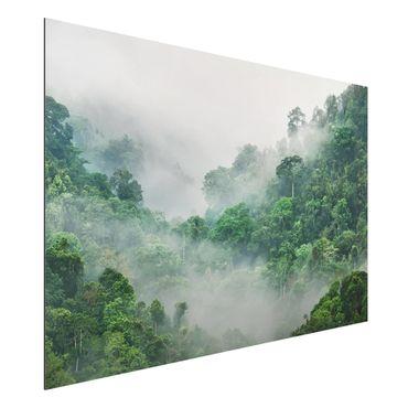 Quadro in alluminio - Jungle In The Fog