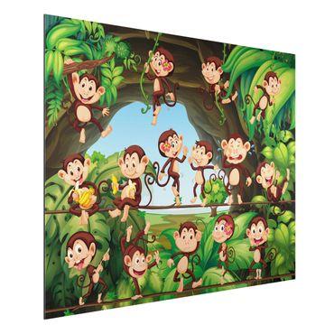 Quadro in alluminio - Jungle Monkeys