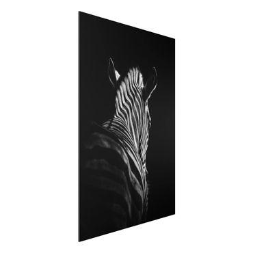 Quadro in alluminio - Scuro silhouette zebra
