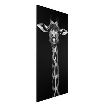 Quadro in alluminio - Scuro Giraffe Portrait