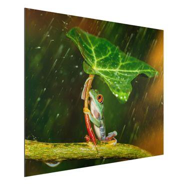 Quadro in alluminio - Rana In The Rain