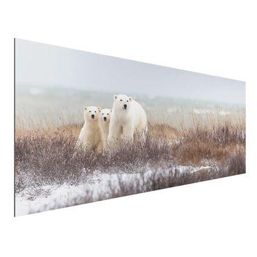 Quadro in alluminio - Orso polare e suoi cuccioli