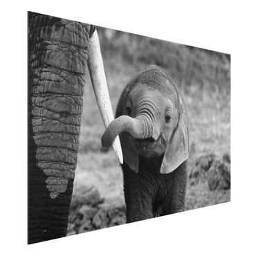 Quadro in alluminio - elefantino