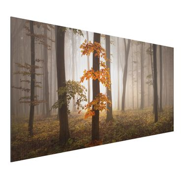 Quadro in alluminio - November Forest