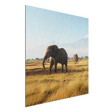 Quadro in alluminio - Elephants in front of the Kilimanjaro in Kenya
