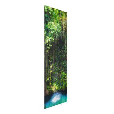 Quadro in alluminio - Hanging roots of Ik-Kil Cenote
