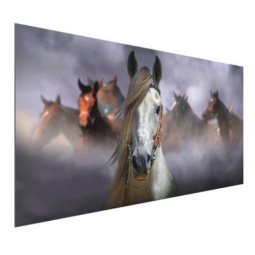Quadro in alluminio - Horses In The Dust