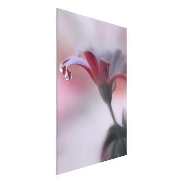 Quadro in alluminio - Invisible Touch